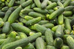 Raccolta verde fresca del cetriolo all'aperto sulla macro del mercato. Fotografia Stock