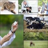 Raccolta veterinaria di cura Fotografia Stock