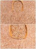 Raccolto dei cereali del frumento Fotografia Stock Libera da Diritti