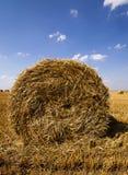 raccolto dei cereali Estate Immagini Stock