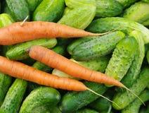 Raccolto dei cetrioli e delle carote verdi freschi Fotografia Stock
