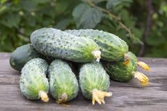 Raccolto dei cetrioli freschi Immagini Stock Libere da Diritti