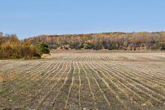 Raccolto del fagiolo della soia di autunno completo Fotografie Stock Libere da Diritti