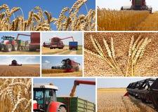 Raccolto del frumento - collage Fotografie Stock