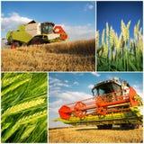 Raccolto del frumento - collage Immagini Stock Libere da Diritti