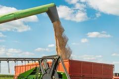 Raccolto del grano Immagini Stock