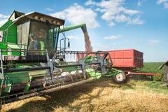 Raccolto del grano Immagine Stock
