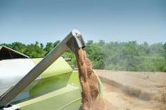 Raccolto del grano Immagini Stock Libere da Diritti