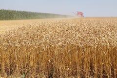 Raccolto del grano Fotografia Stock