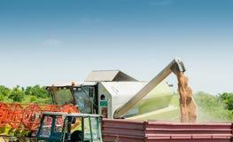 Raccolto del grano Fotografie Stock