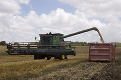 Raccolto del grano Fotografia Stock Libera da Diritti