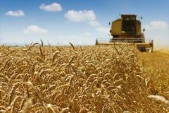 Raccolto del grano Fotografie Stock Libere da Diritti