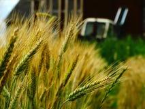 Raccolto del grano sul campo Fotografia Stock Libera da Diritti
