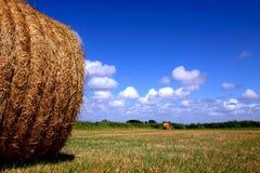 Raccolto del raccolto in un campo Fotografia Stock