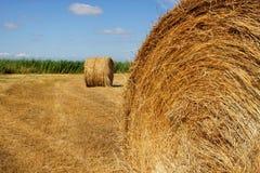 Raccolto del raccolto in un campo Immagini Stock