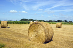Raccolto del raccolto in un campo Fotografie Stock