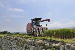 Raccolto del riso fotografia stock