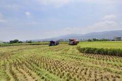 Raccolto del riso immagine stock libera da diritti