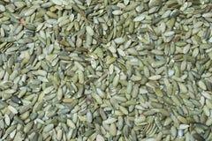 Raccolto del seme di zucca Immagine Stock Libera da Diritti