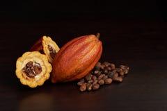 Raccolto dell'agricoltore del cacao Fotografia Stock Libera da Diritti