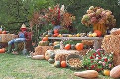 Raccolto dell'azienda agricola in autunno Immagine Stock