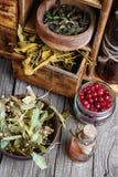 Raccolto dell'erba medicinale Fotografie Stock Libere da Diritti