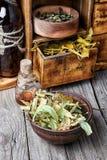 Raccolto dell'erba medicinale Fotografia Stock Libera da Diritti