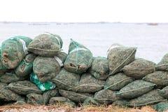 Raccolto dell'ostrica lungo il mare adriatico, Italia Fotografia Stock Libera da Diritti