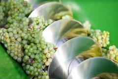 Raccolto dell'uva Fotografie Stock