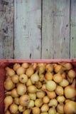 Raccolto della cipolla nel campo di Valencia Spain huerta Fotografia Stock Libera da Diritti