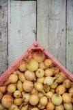Raccolto della cipolla nel campo di Valencia Spain huerta Immagini Stock