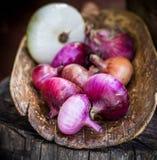 Raccolto della cipolla porpora in un vecchio merlo acquaiolo di legno Fotografia Stock Libera da Diritti