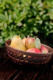Raccolto della frutta Fotografia Stock Libera da Diritti