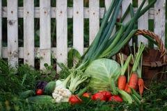 Raccolto della merce nel carrello delle verdure Fotografia Stock