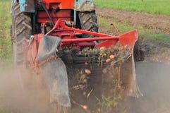 Raccolto della patata Fotografia Stock