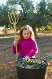 Raccolto della ragazza del bambino dell'agricoltore del raccolto delle olive Immagini Stock