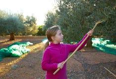 Raccolto della ragazza del bambino dell'agricoltore del raccolto delle olive Immagine Stock Libera da Diritti