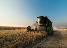 Raccolto della soia in autunno Fotografia Stock