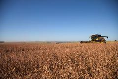 Raccolto della soia nel giorno soleggiato fotografie stock libere da diritti