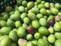 Raccolto delle olive a mano Fotografie Stock