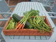 Raccolto delle verdure fotografia stock libera da diritti