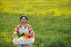 Raccolto delle verdure immagine stock
