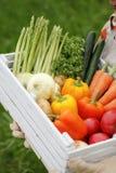 Raccolto delle verdure fotografia stock
