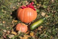 Raccolto di autunno della zucca e della zucca Immagine Stock