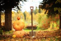 Raccolto di autunno delle zucche Halloween Fotografia Stock Libera da Diritti