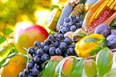 Raccolto di autunno - frutta e verdure Fotografia Stock Libera da Diritti