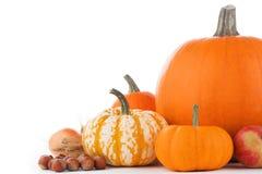 Raccolto di autunno su bianco Fotografie Stock Libere da Diritti