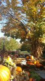 Raccolto di caduta alla contea di Orange Arborium Fotografie Stock