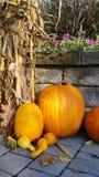 Raccolto di caduta alla contea di Orange Arborium Fotografia Stock