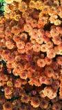 Raccolto di caduta, alla contea di Orange Arborium Fotografia Stock